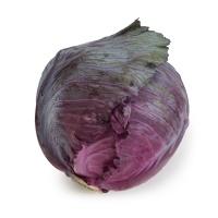 春播安心直采紫甘蓝500-600g