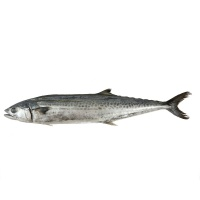 春播冰鲜水产野生海捕鲅鱼 1条装 800-1000g