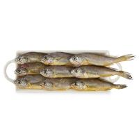 春播冰鲜水产东海野生小黄鱼450-500g