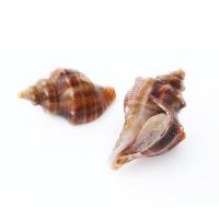 春播活水产活海螺500g