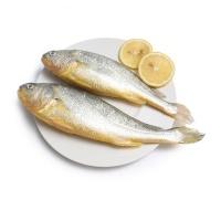 春播冰鲜水产大黄鱼2条装(500-600g)
