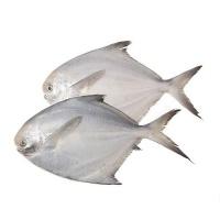 春播冰鲜水产鲳鱼(300-380g)2只装