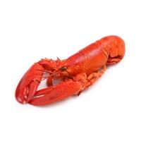 加拿大熟冻波士顿龙虾300g