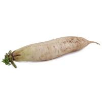 春播农庄有机栽培丑白萝卜450-550g