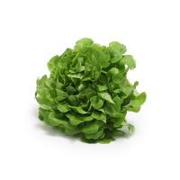 春播安心直采水培橡叶绿生菜120g