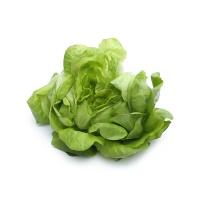 春播安心直采水培奶油绿生菜120g