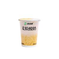 西域春麦粒酸奶180g