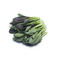 兴农鼎力农庄有机栽培紫油菜250g