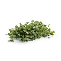 春播联盟农庄有机栽培豌豆尖200g