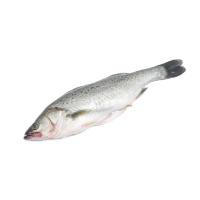 春播冰鲜水产三去海鲈鱼550-600g