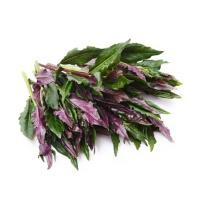 春播联盟农庄紫背天葵200g