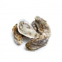 产地直采乳山牡蛎3号2000g(约15只)