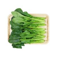 春播安心直采有机菠菜250g