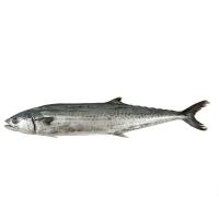 冰鲜东海鲅鱼1000g(300-500g/条)