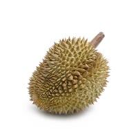 泰国文记彩虹榴莲1粒装(1.5-2kg)