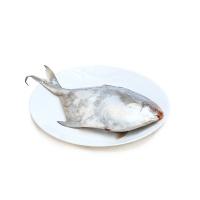 启东野生白鲳鱼1条(400-500g/条)