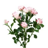 花楹折射多头玫瑰10枝