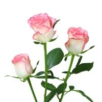 花楹爱莎玫瑰10枝